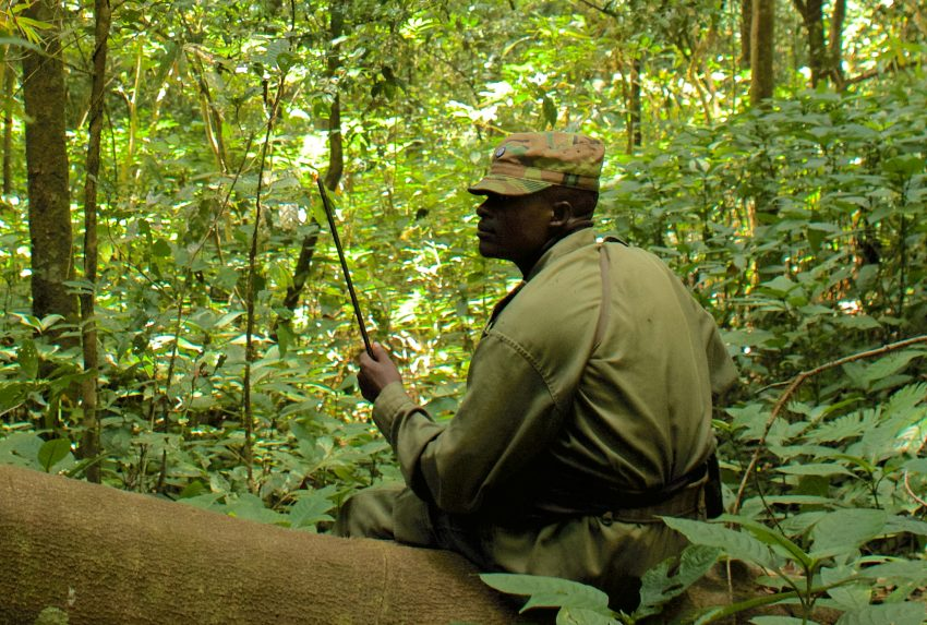 Tanzania-Ntakata-Forest-Ranger-in-Forest