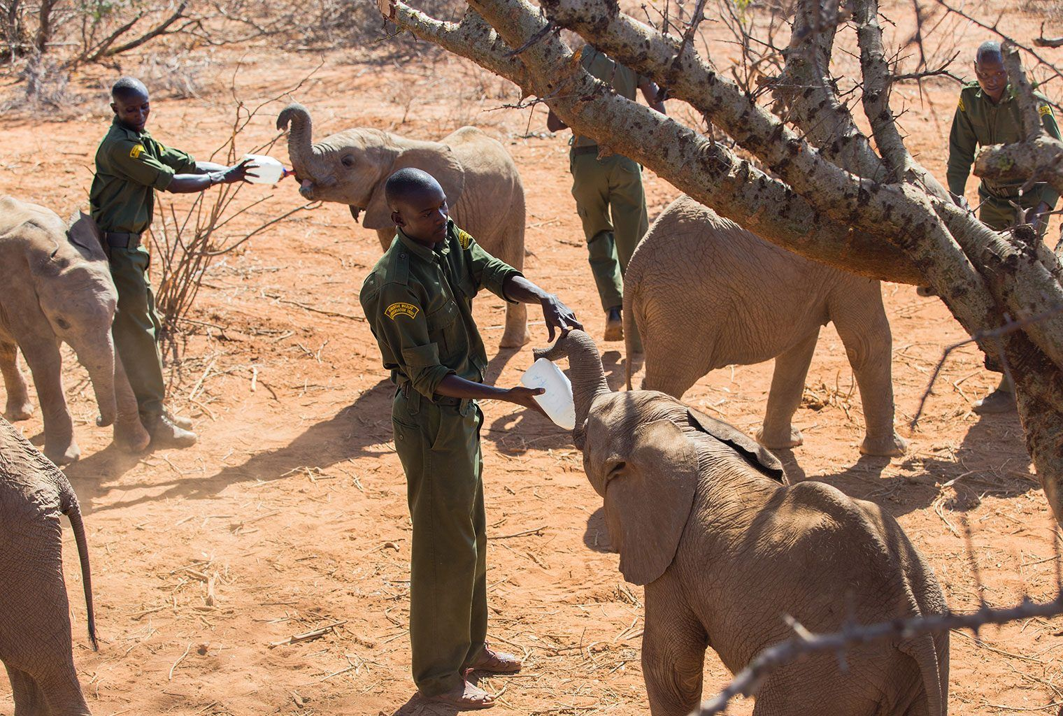 Kenya Elephant Orphanage Conservation Journey