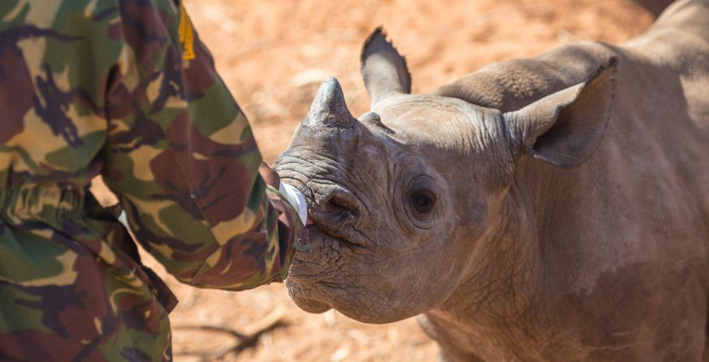 Hope-For-Rhinos-Simon-Morris-Image