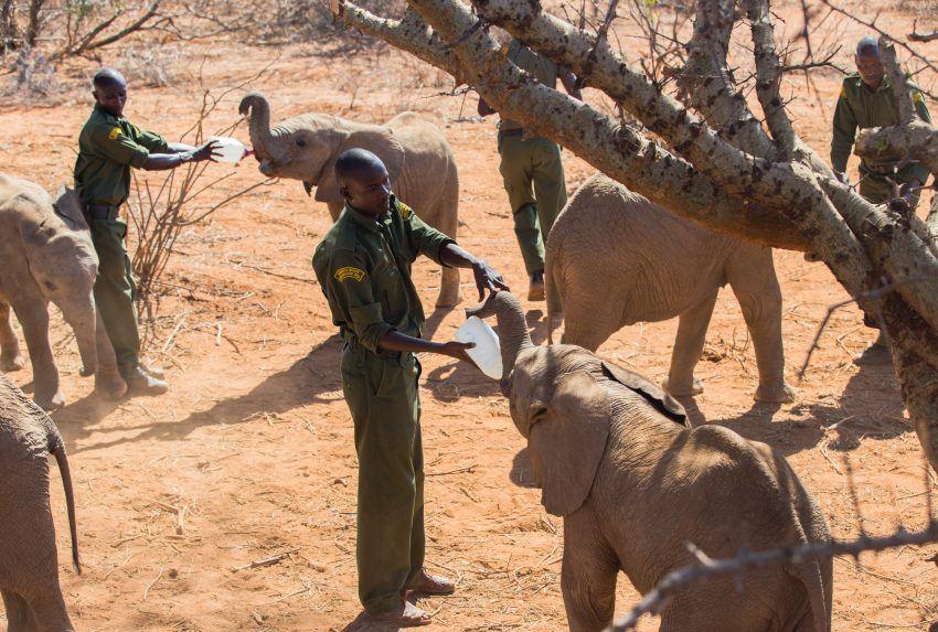 Kenya Conservation Reteti Elephant Feeding