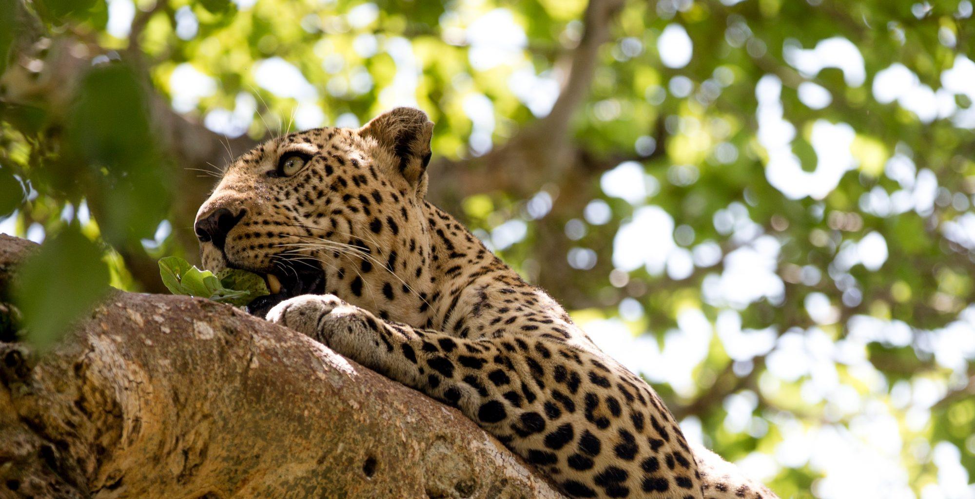 Kenya Maasai Mara Wildlife