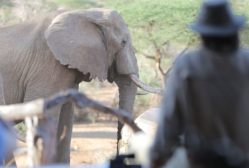 Guest-with-elephant-at-Sarara