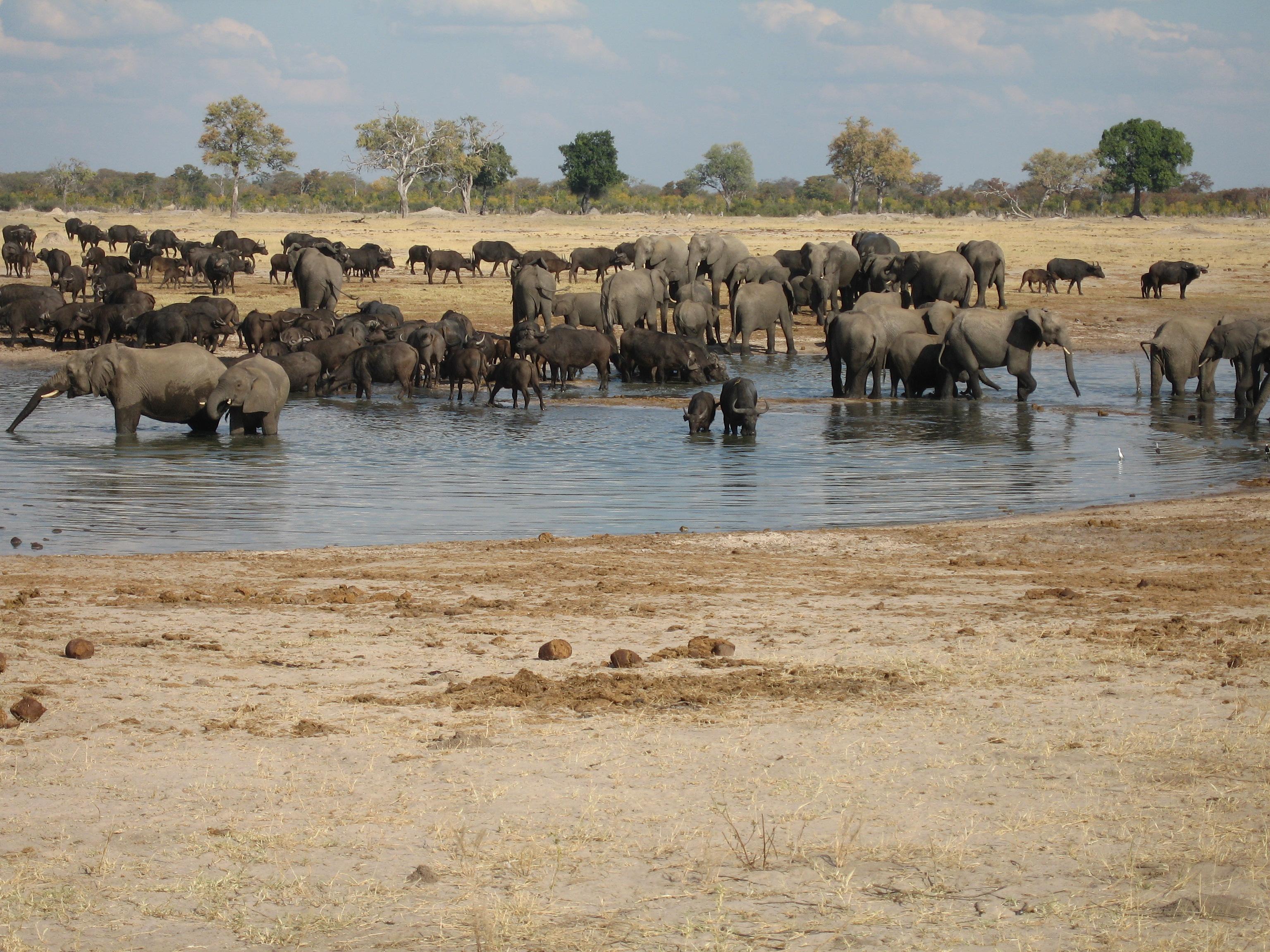 Zimbabwe Wildlife Conservation Hwange