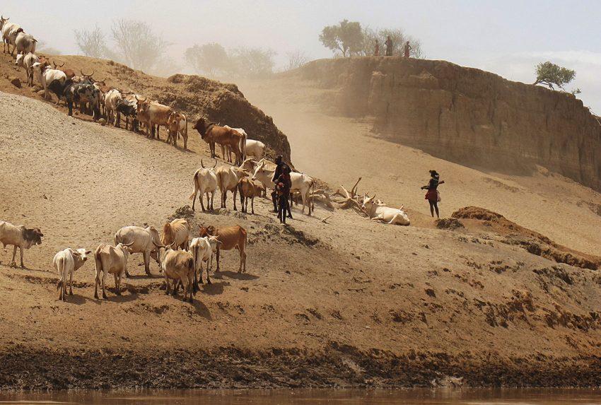 Omo-Valley-Cattle-Herding