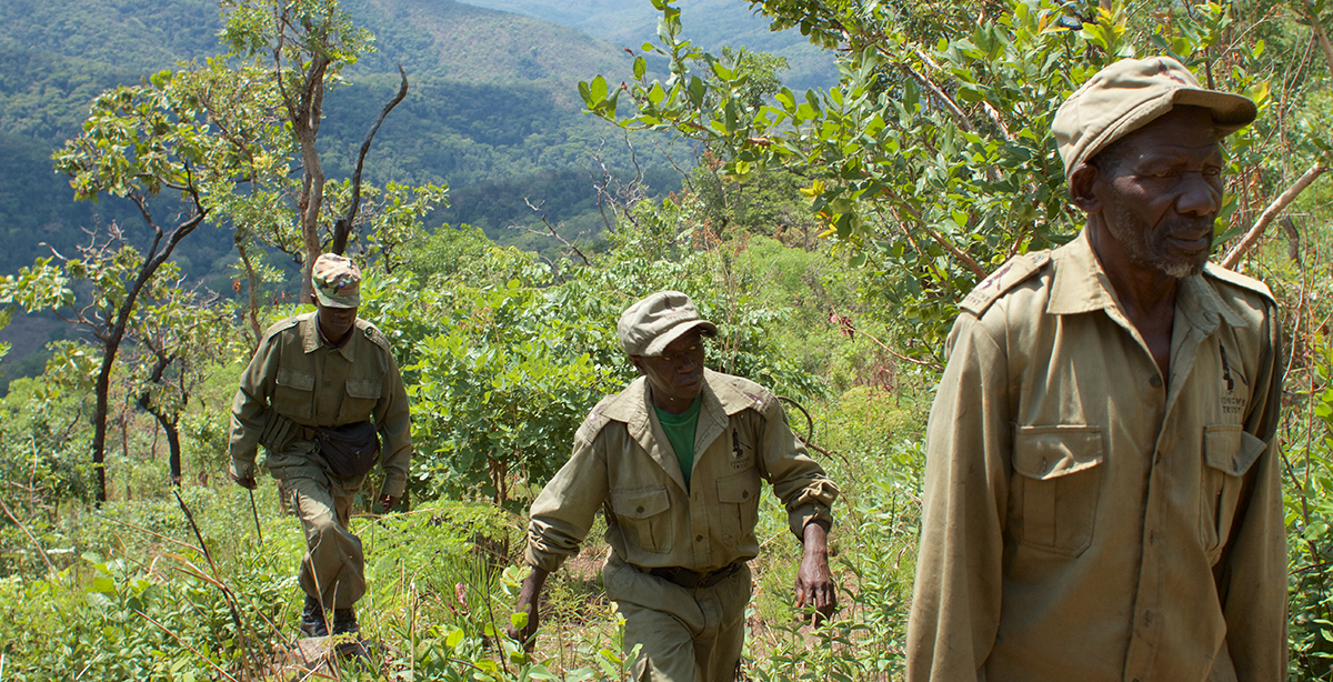 Tongwe staff walking through the Ntakata Forest