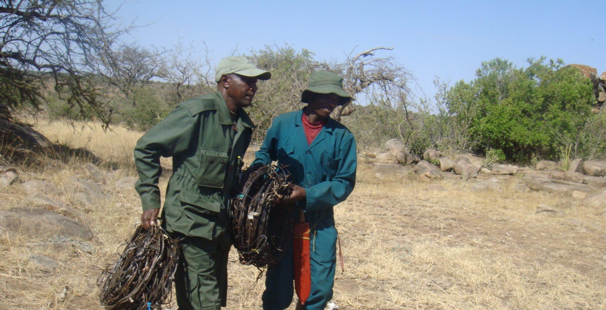 Nomad-Tanzania-Serengeti-De-Snaring