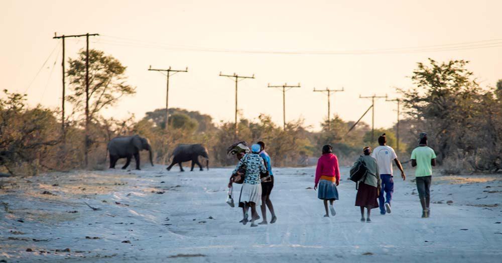 Ecoexist Human Elephant Conflict