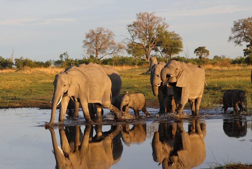 Botswana-Elephant-Water