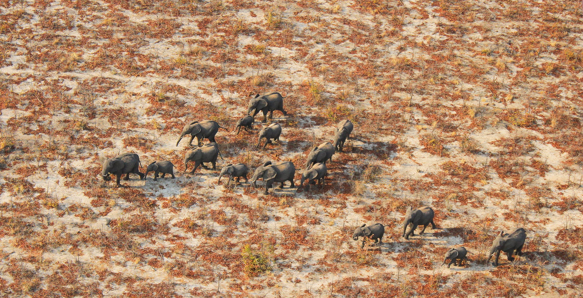 Ecoexist-Elephant-Herd-From-Above