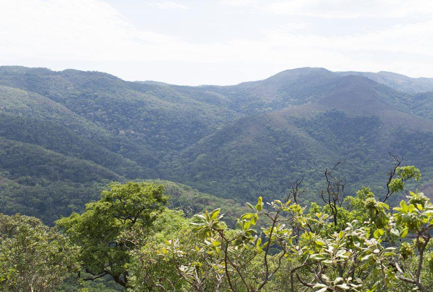 Tongwe-Trust-Ntakata-Forest