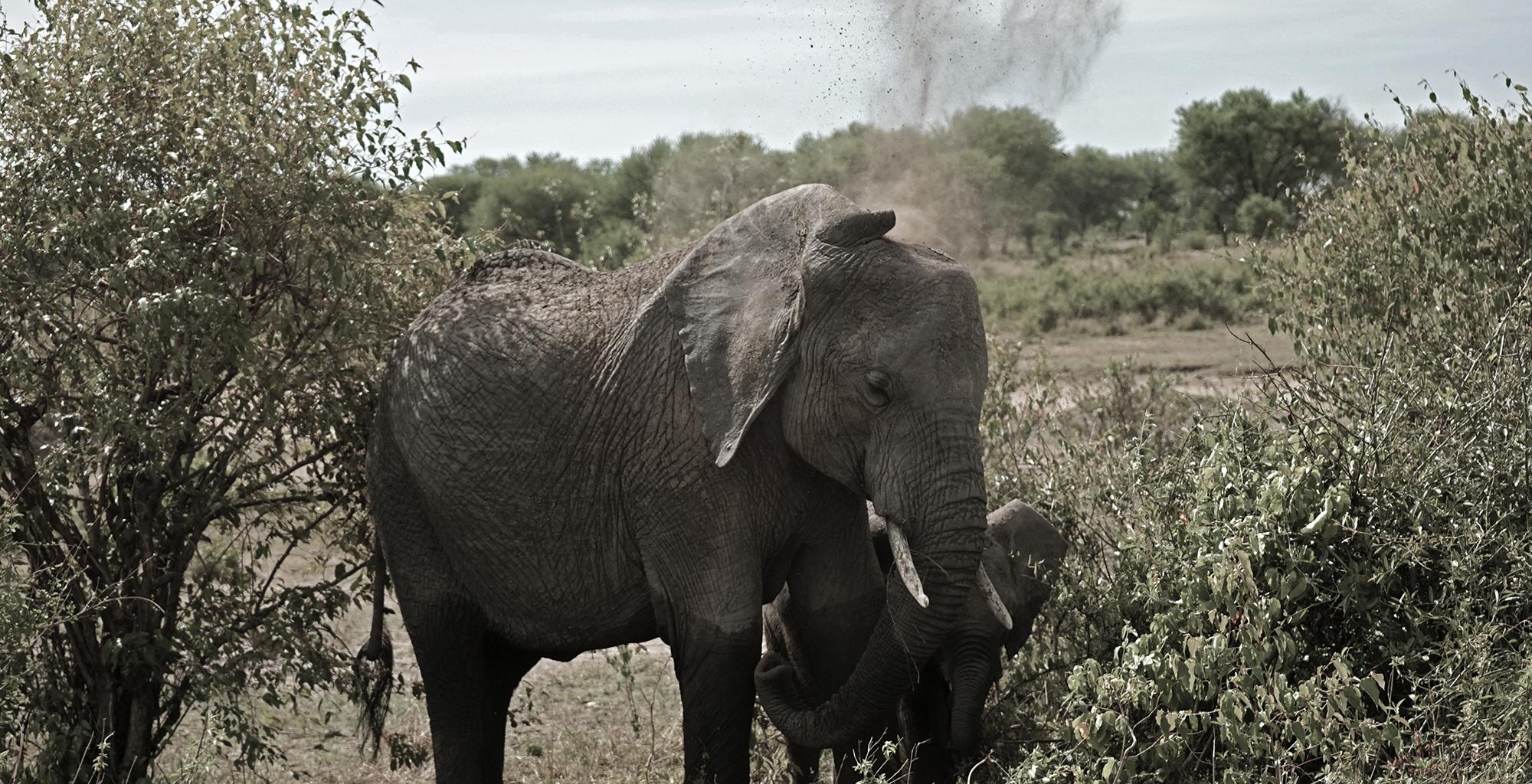 Elephant-Tanzania-Simon-Morris